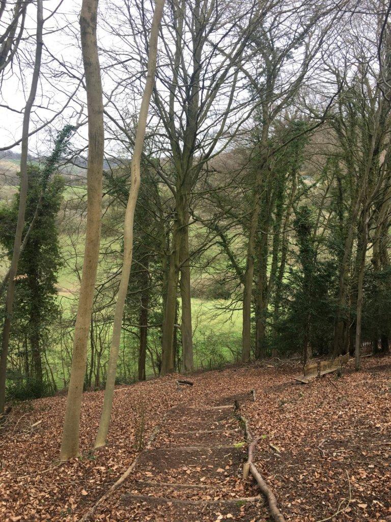 Elcombe's woodlands